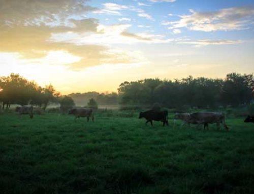 100 Percent Grass Fed vs Raw Milk