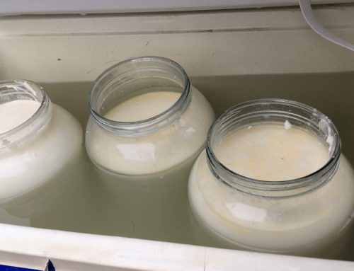 Simple Recipes for Raw Milk Homemade Yogurt #2